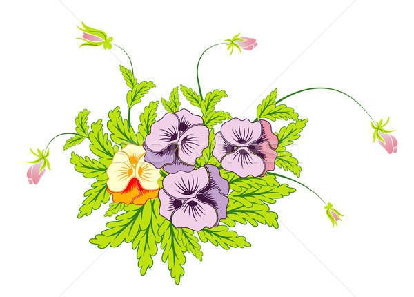 Bouquet of pansies Stock photo © -TAlex-