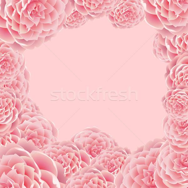 Rosa frame impianto bianco rosa ombra Foto d'archivio © 0mela
