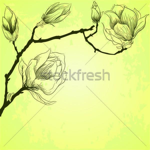 Stockfoto: Voorjaar · magnolia · bloemen · verf · tuin · zomer