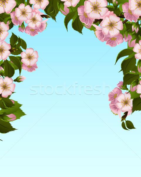 Elma çiçek çerçeve ağaç doğa arka plan Stok fotoğraf © 0mela
