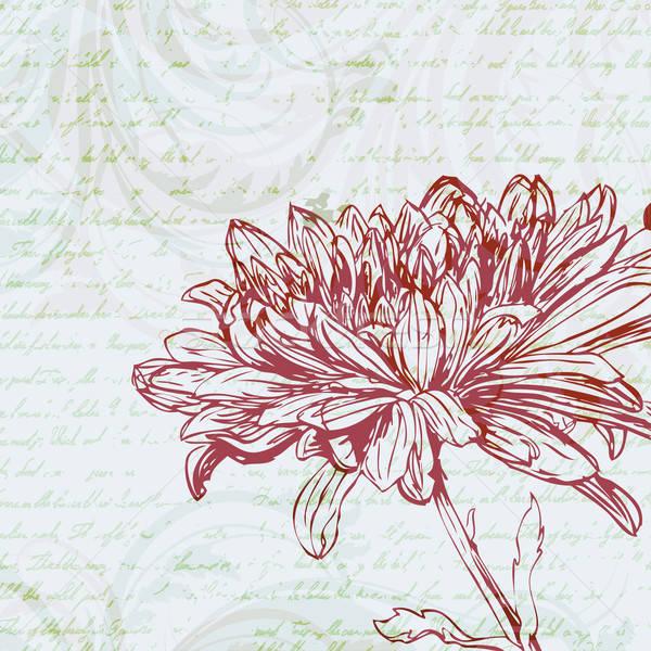 Retro krizantem çiçek arka plan sanat Stok fotoğraf © 0mela