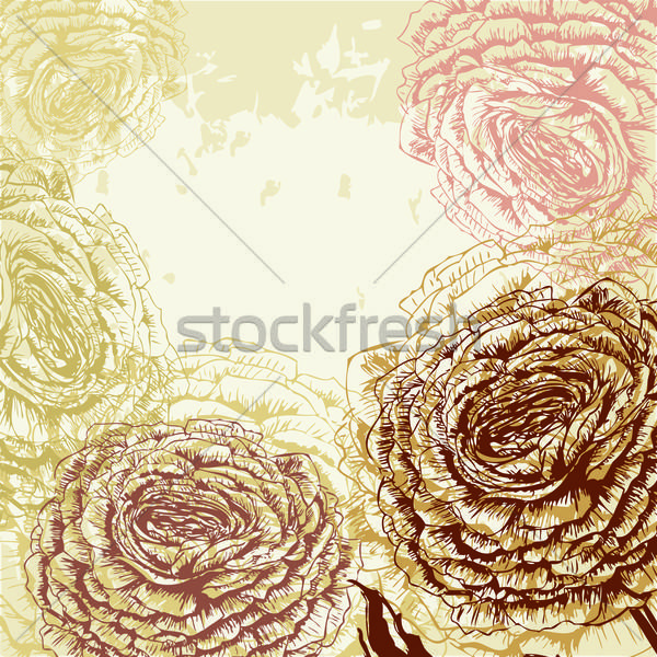 Rose texture résumé nature design Photo stock © 0mela