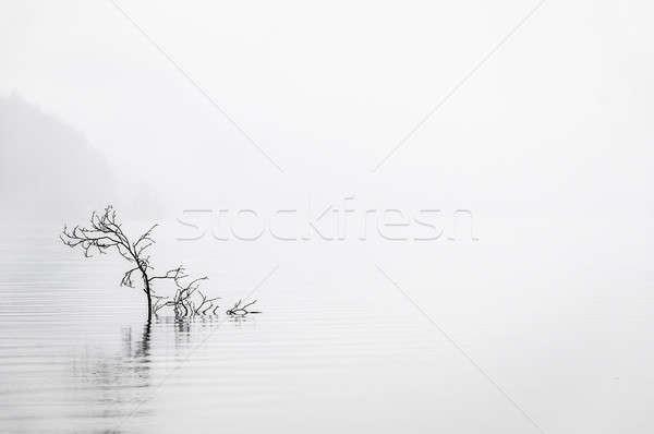 Calme eau tôt le matin brouillard Photo stock © 1Tomm