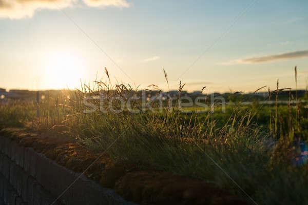 красивой закат вечер мнение солнце горизонте Сток-фото © 1Tomm
