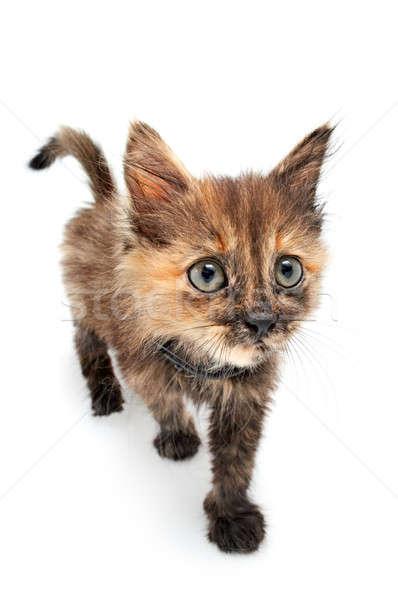 забавный кошки небольшой Китти белый красоту Сток-фото © 26kot
