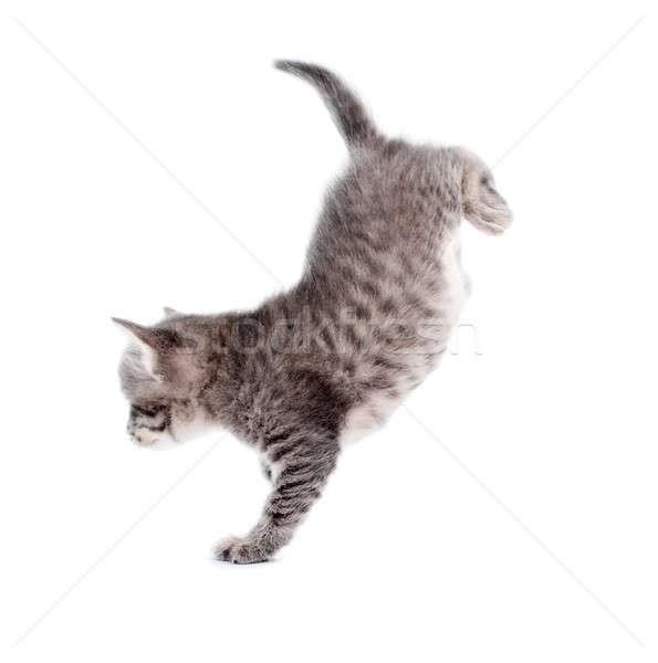 Сток-фото: котенка · изолированный · белый · лице · кошки · фон