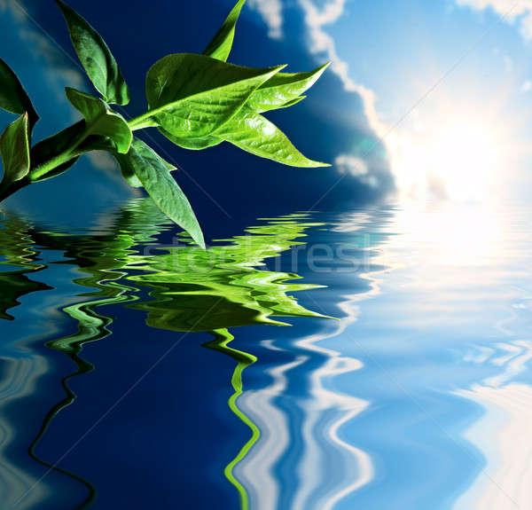 Verde impianto acqua cielo blu cielo Foto d'archivio © 26kot