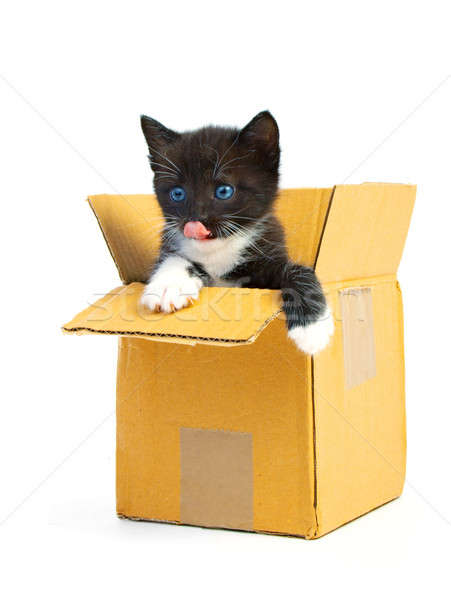 Сток-фото: котенка · Cute · белый · оранжевый · весело · животные