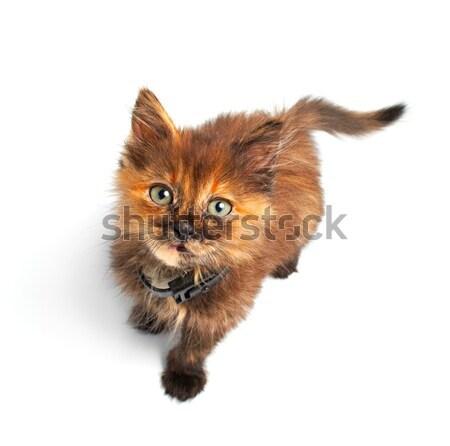 cat Stock photo © 26kot