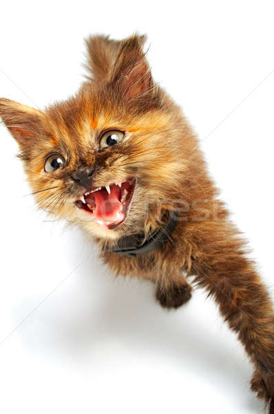 small kitty Stock photo © 26kot
