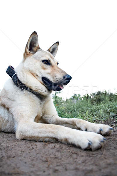 dog Stock photo © 26kot