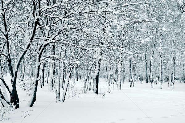nature in winter Stock photo © 26kot