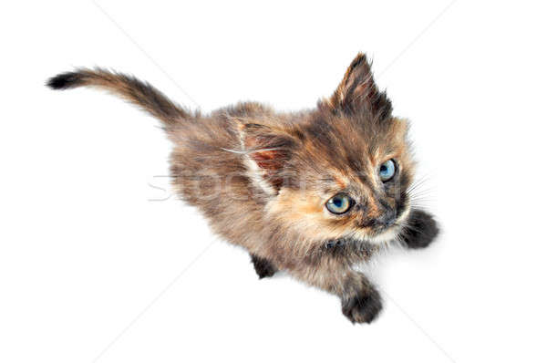 kitty Stock photo © 26kot