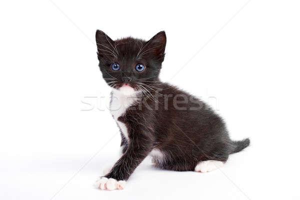 котенка изолированный белый волос фон красоту Сток-фото © 26kot