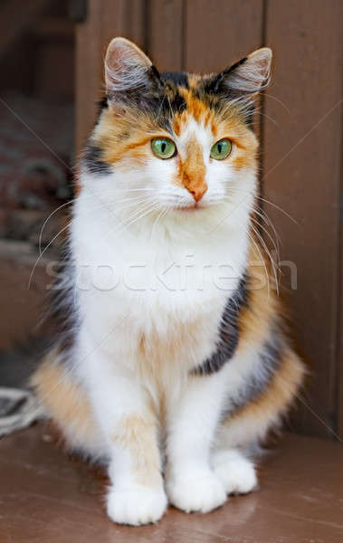 cat Stock photo © 26kot