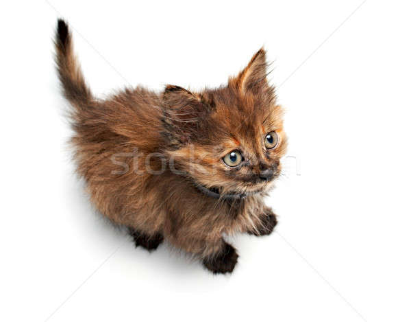 Klein pussy kat charmant geïsoleerd grijs Stockfoto © 26kot