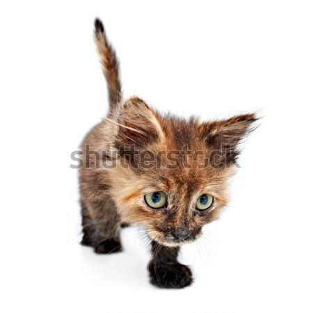 Kitty portrait faible isolé blanche oeil Photo stock © 26kot