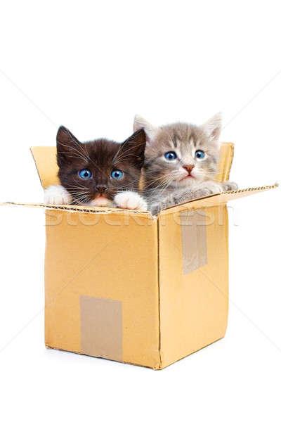 котят окна изолированный белый лице фон Сток-фото © 26kot