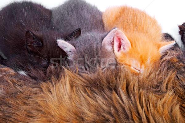 Gatitos aislado blanco familia naturaleza fondo Foto stock © 26kot