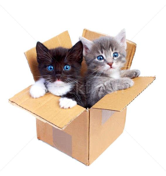 kittens Stock photo © 26kot
