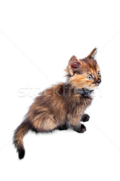Kitty portrait faible blanche oeil amour Photo stock © 26kot