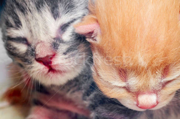 Cute chatons orange amusement animaux couleur Photo stock © 26kot