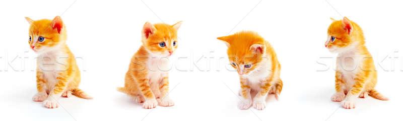 Kedi yavrusu kırmızı beyaz doğa arka plan güzellik Stok fotoğraf © 26kot