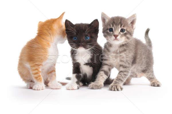 три котят изолированный белый глаза лице Сток-фото © 26kot