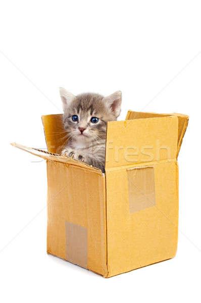 Сток-фото: котенка · изолированный · белый · волос · фон · красоту