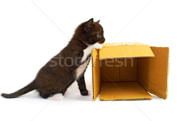 kitten with box Stock photo © 26kot