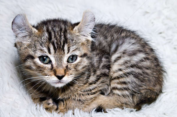 Stock photo: Tiny Kitten