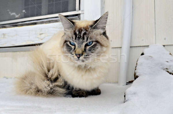 Cat in the Snow Stock photo © 2tun