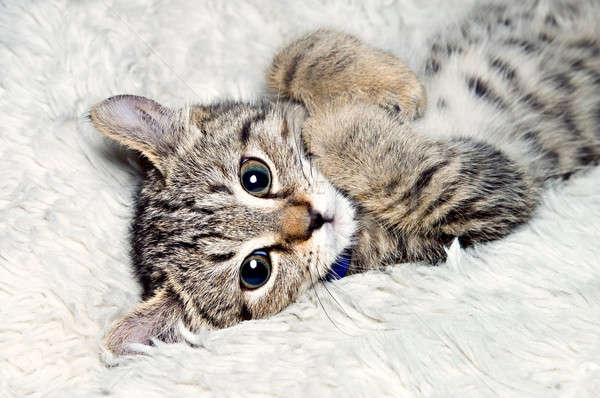Cute Kitten Stock photo © 2tun