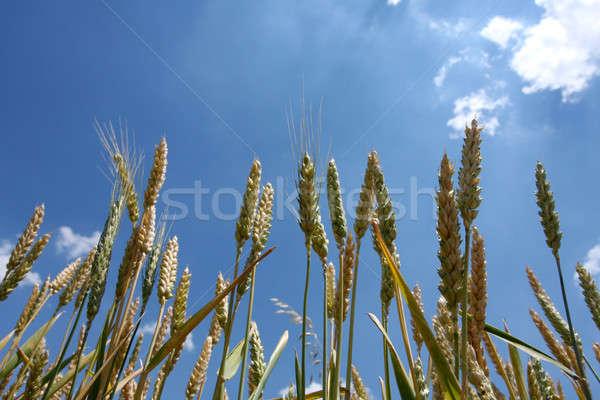 穀物 ルーム コピー ストックフォト © 33ft