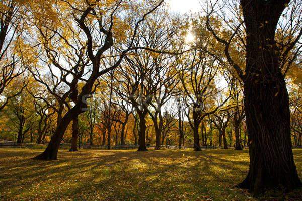 秋 セントラル·パーク ニューヨーク 秋 木 フェンス ストックフォト © 33ft