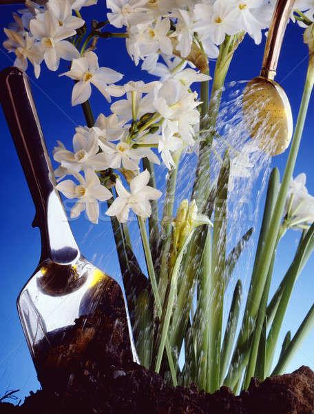 Canteiro de flores tiro flores brancas jardim pá Foto stock © 350jb