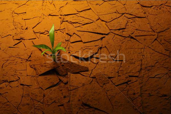 Verde deserto piso vermelho Foto stock © 350jb