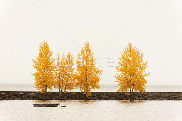 Trees in autumn color on a harbor quay Stock photo © 3523studio