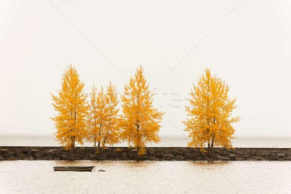 árvores outono cor porto cais pequeno Foto stock © 3523studio