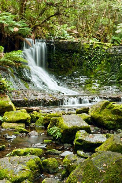 Horseshoe Falls, Mt Field National Park, Tasmania Stock photo © 3523studio