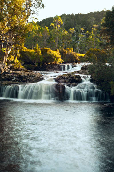 Waterfall close to Cradle Mountain Lodge Stock photo © 3523studio