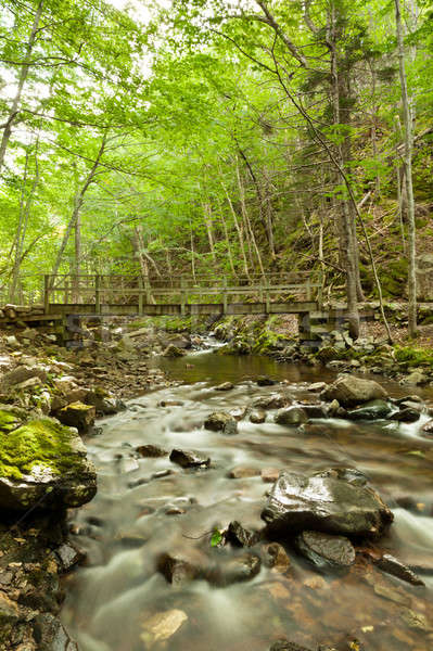 River flows through a forest in the backgrond is a bridge Stock photo © 3523studio