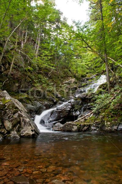 Waterfall in a forest in autumn season Stock photo © 3523studio