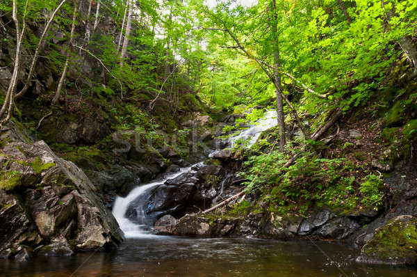 Waterfall in the forest in autumn season  Stock photo © 3523studio