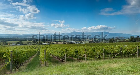 View of the Yarra Valley, near Melbourne, Australia Stock photo © 3523studio
