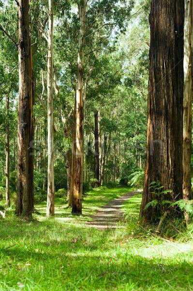 Wald Park Tal Melbourne Australien Holz Stock foto © 3523studio