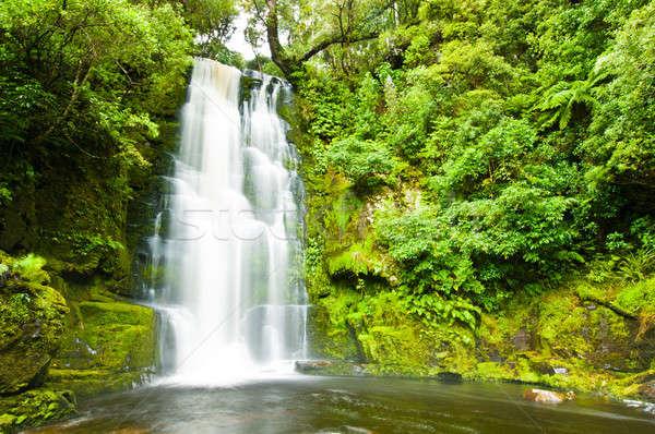 Mac zuiden New Zealand boom natuur licht Stockfoto © 3523studio