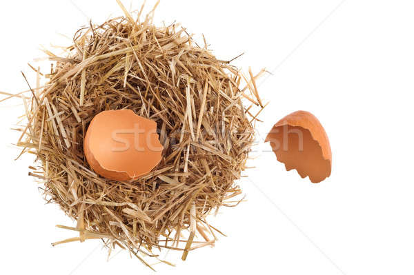 Straw nest with broken chicken eggshell  Stock photo © 3523studio