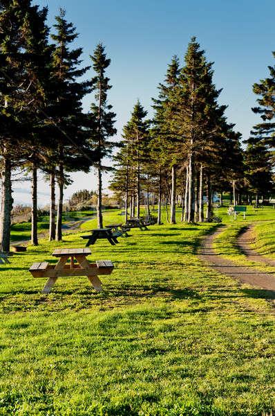 美しい キャンプ場 午前 太陽 木材 森林 ストックフォト © 3523studio