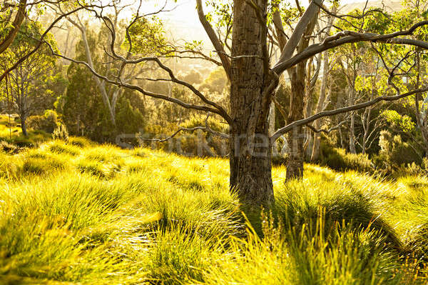 Backlit grass and trees by the sun during a beautiful sunset Stock photo © 3523studio
